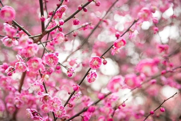想见你,春暖花开后的色彩